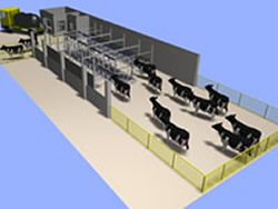 Dairy House Pakistan Has Full In Capability For Developing Designs Schematic Layouts Of Milking Parlour Pit Holding Area Milk Room Animal